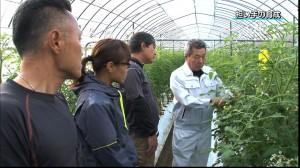 新規就農育成事業