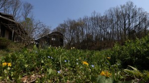spring-7
