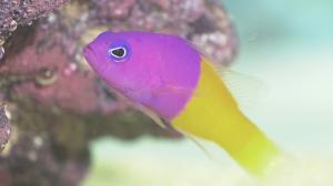 8.ピンクと黄色の魚