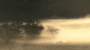 ②八島ヶ原湿原の霧